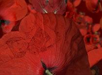 documental flores de ruanda